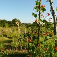 Janun Projekt Garten der Vielfalt